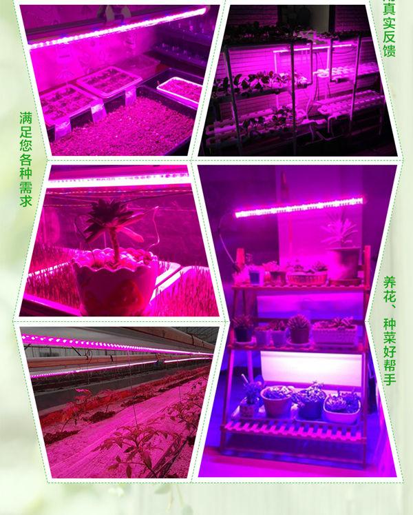 金光通LED植物生长灯4